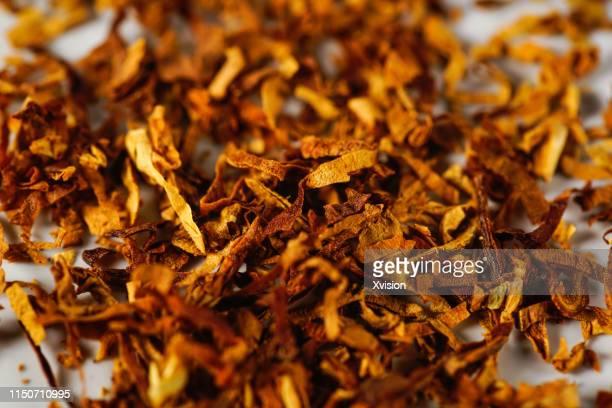 tobacco leaf with white background in slow motion - tabakwaren stock-fotos und bilder