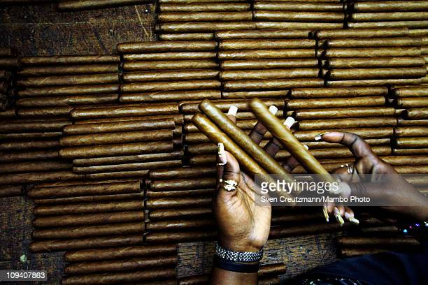 A tobacco worker sorts Cuban cigars in the Partagas cigar factory in Old Havana during the 13th Habanos Festival on February 24 2011 in Havana Cuba...