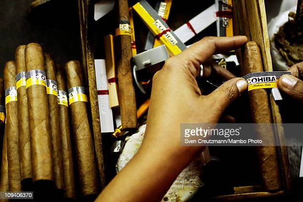 A tobacco worker works on a Cohiba cigar in the Partagas cigar factory in Old Havana during the 13th Habanos Festival on February 24 2011 in Havana...