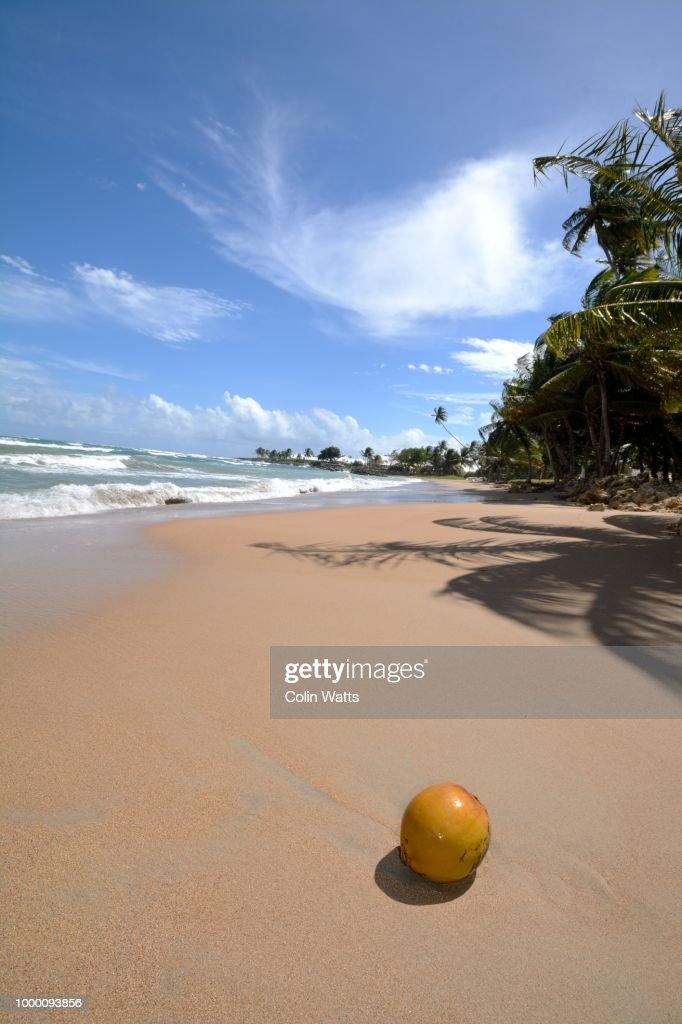 Tobago Islands : Stock Photo