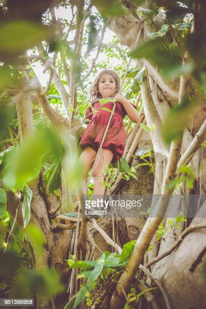 today, in the tree... - banyan tree stock pictures, royalty-free photos & images