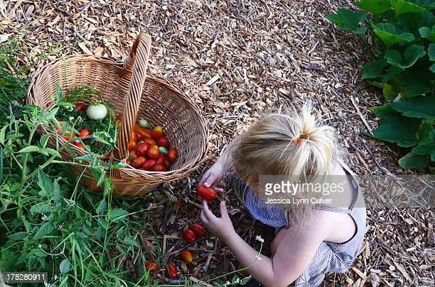 Toddler and Tomatoes