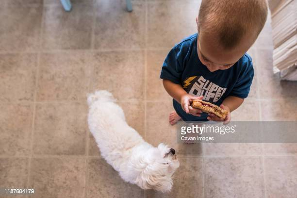 toddler boy holding sandwich in kitchen while small dog looks at him - peanut butter and jelly sandwich stock pictures, royalty-free photos & images