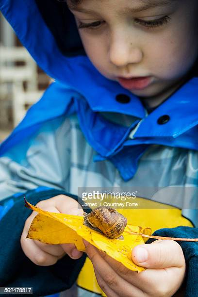 Toddler boy in rain jacket watches snail cross yellow leaf in Chico, California.
