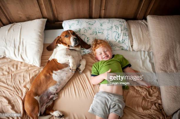 toddler boy waking up with basset hound dog next to him at home in bed - basset hound stock pictures, royalty-free photos & images