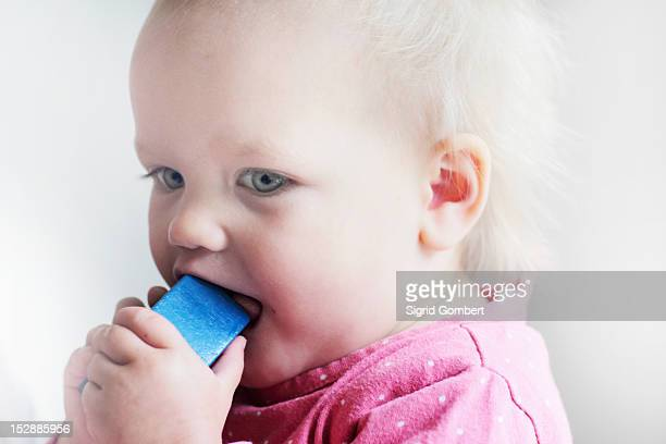 toddler chewing on toy block - sigrid gombert stock pictures, royalty-free photos & images