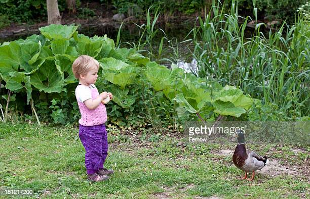 Toddler feeding duck