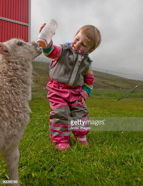 Toddler feeding young lamb