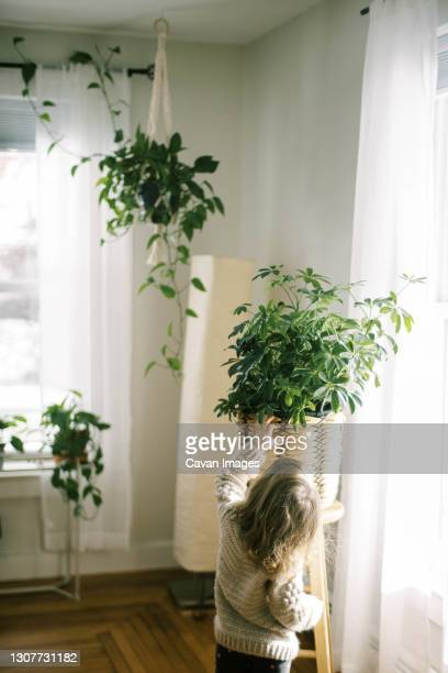 toddler girl standing by a sunny bright window with a big houseplant - queensland umbrella tree stock pictures, royalty-free photos & images