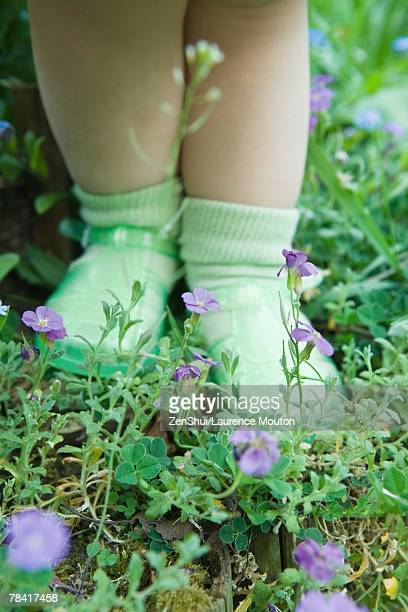 toddler girl standing on wildflowers, low section - jelly shoe stock pictures, royalty-free photos & images