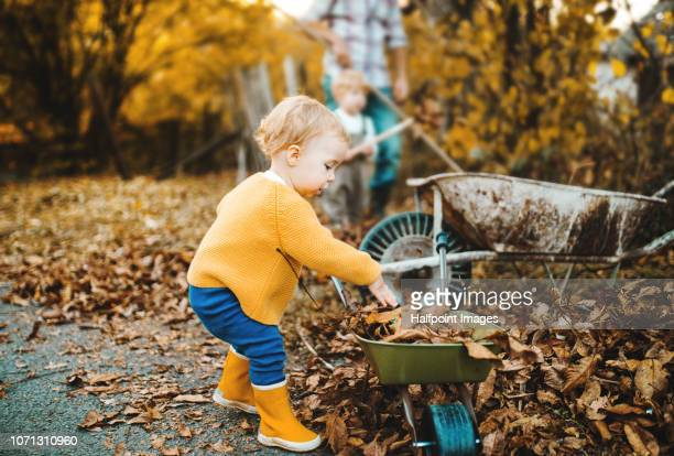 A toddler girl with brother and father raking leaves outdoors in back yard in autumn.