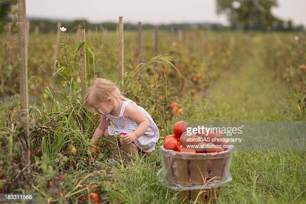 Toddler girl with bushel of tomatoes