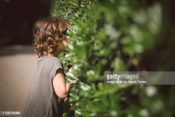 toddler hiding his head inside the bushes - autism awareness stock pictures, royalty-free photos & images