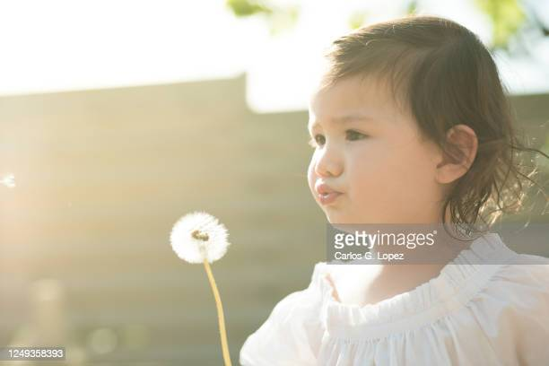 toddler in white dress blows a dandelion in a garden in a sunny spring day - white dress stock pictures, royalty-free photos & images