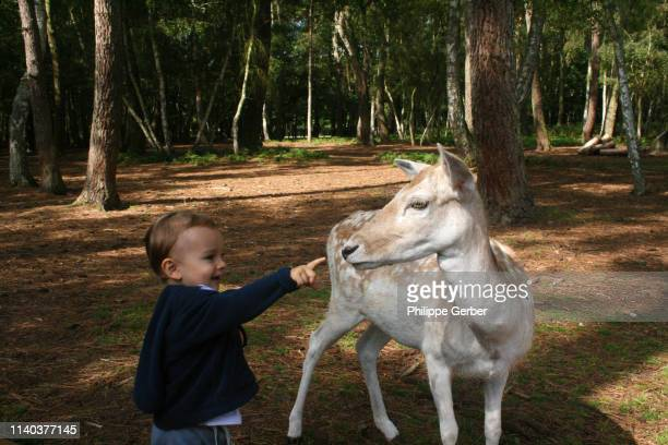 toddler interacting with a deer in france - sarthe stock pictures, royalty-free photos & images