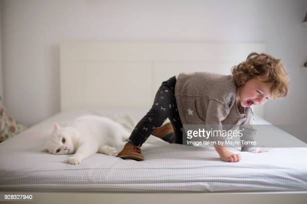 toddler messing around with the cat in parents bed - nur kinder stock-fotos und bilder