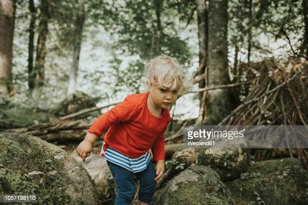 toddler on a trip in forest - vinden stockfoto's en -beelden