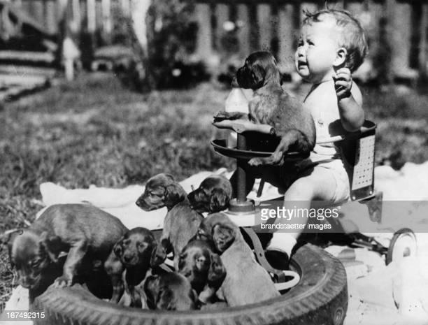 Toddler on the tricycle with nine puppies. About 1940. Photograph. Ein Kleinkind auf dem Dreirad mit neun Hundewelpen. Um 1940. Photographie. .