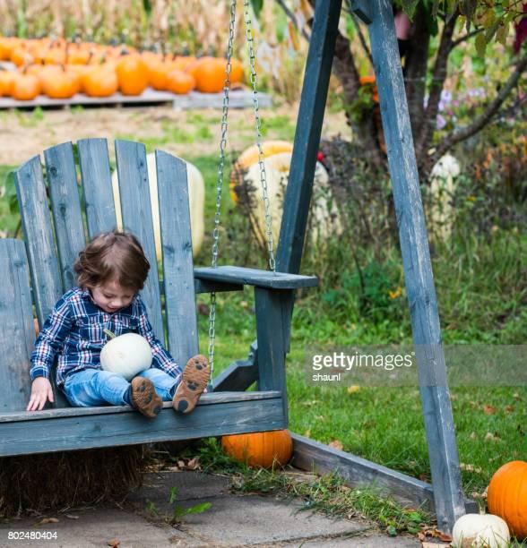 toddler picking pumpkins - pumpkin harvest stock pictures, royalty-free photos & images