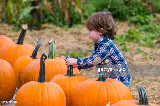 Toddler Picking Pumpkins