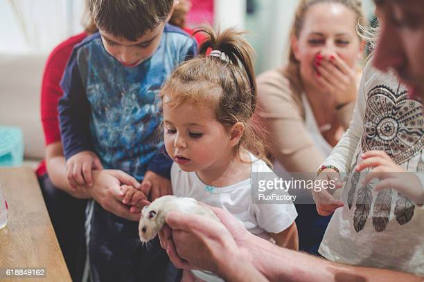 toddler playing and petting hamster on a kids party - hamster photos et images de collection