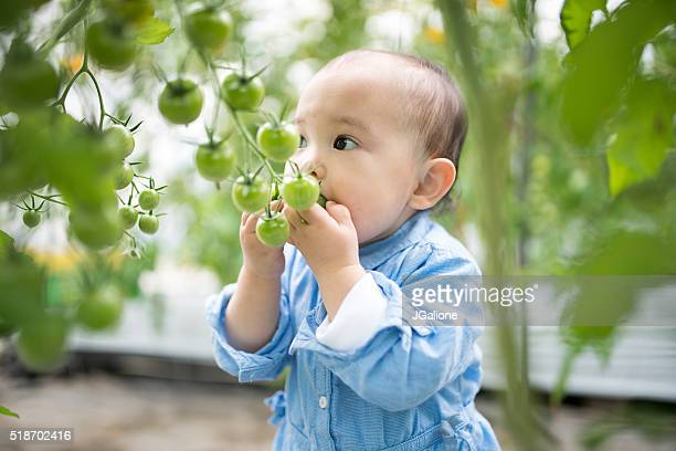 Toddler trying to eat tomatoes straight from the vine