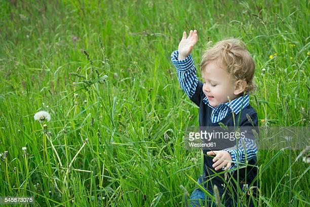 Toddler walking on summer meadow