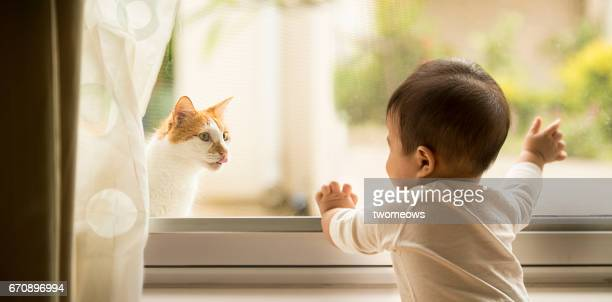 Toddler waving, looking at a stray cat through window.