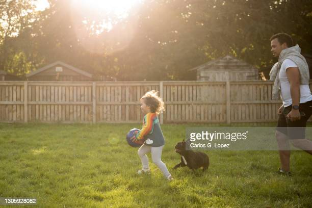 a toddler wearing a colourful top holds a football and runs alongside her father and dog in a sunny day in a public play park in edinburgh - season 3 stock pictures, royalty-free photos & images