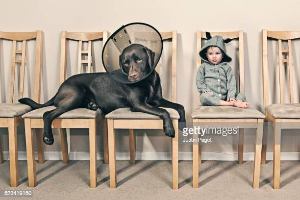 toddler with her pet dog in waiting room - collar stock pictures, royalty-free photos & images