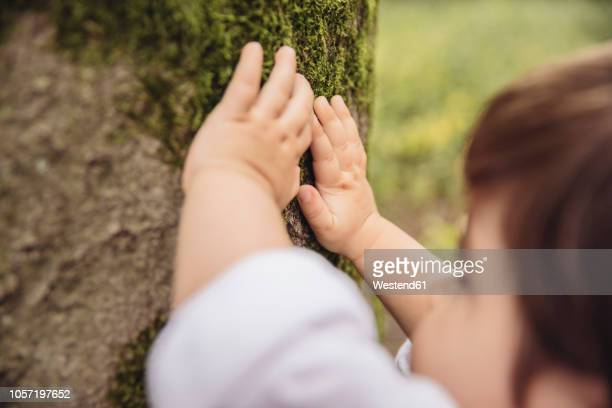 toddler's hands feeling tree moss in park - sinneswahrnehmung stock-fotos und bilder