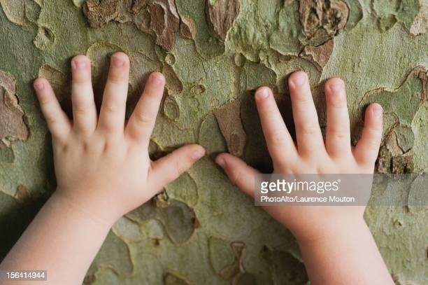 toddler's hands touching tree bark - toucher photos et images de collection