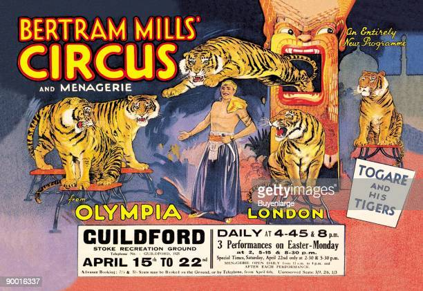 Togare and his Tigers Bertram Mills' Circus and Menagerie