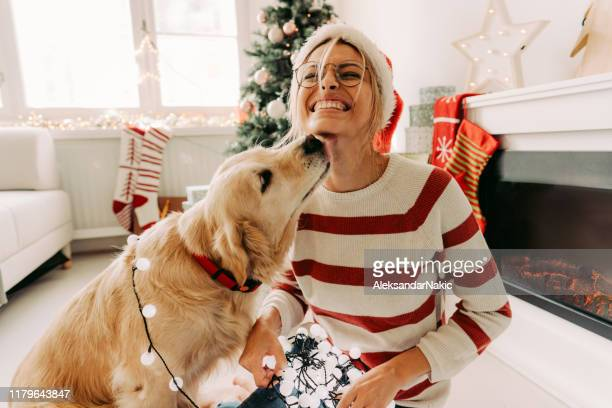 together for christmas - christmas dog stock pictures, royalty-free photos & images