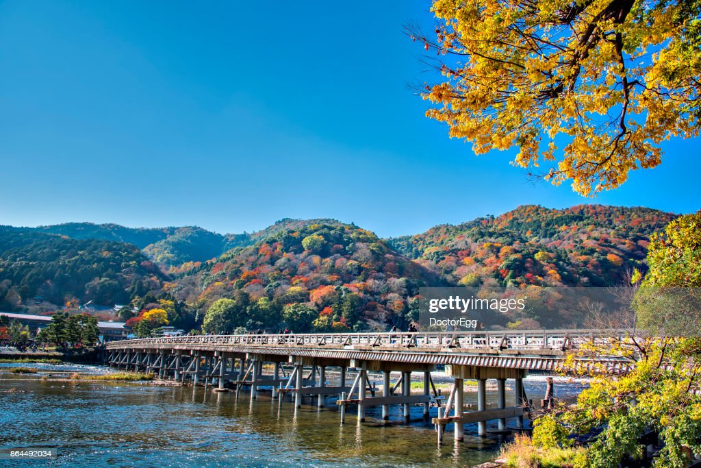 Togetsukyo Bridge across hozugawa river and Yellow Ginko Tree with Colourful Maple Tree on the Mountain Background, Arashiyama, Kyoto in Autumn : Stock Photo