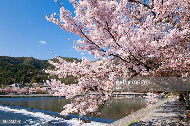 togetsukyo brige and hozu river in spring - 四月 ストックフォトと画像