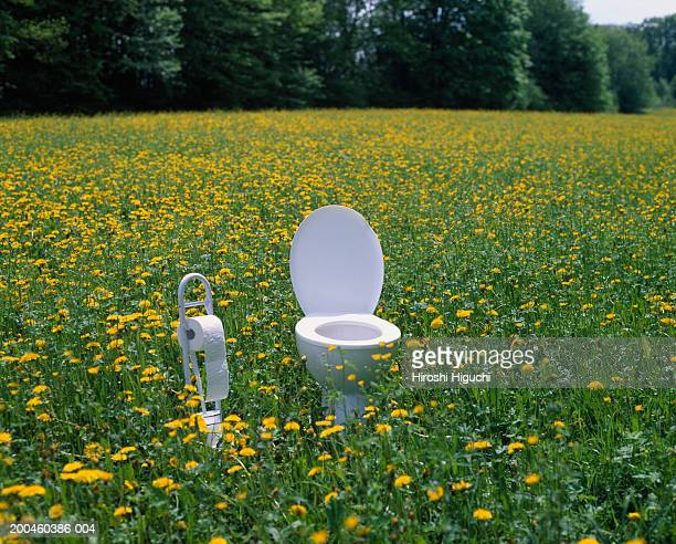 toilet and toilet paper holder in field of dandelions (taraxacum sp.) - toilet paper tree stock pictures, royalty-free photos & images