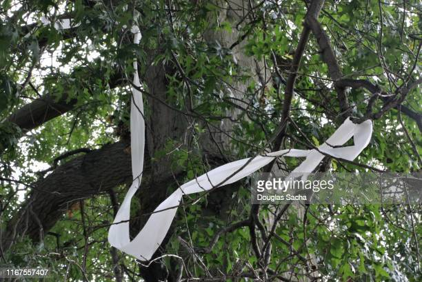toilet paper hanging from a tree - toilet paper tree stock pictures, royalty-free photos & images
