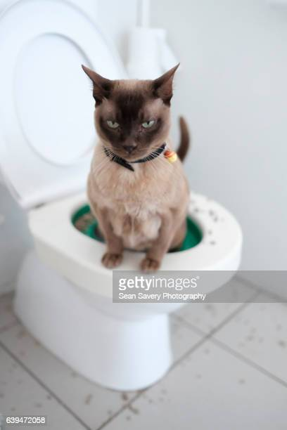 Toilet Trained