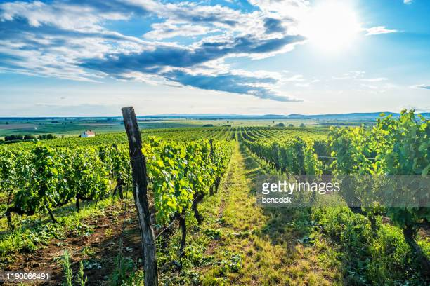 tokaj wine region in hungary - hungary stock pictures, royalty-free photos & images