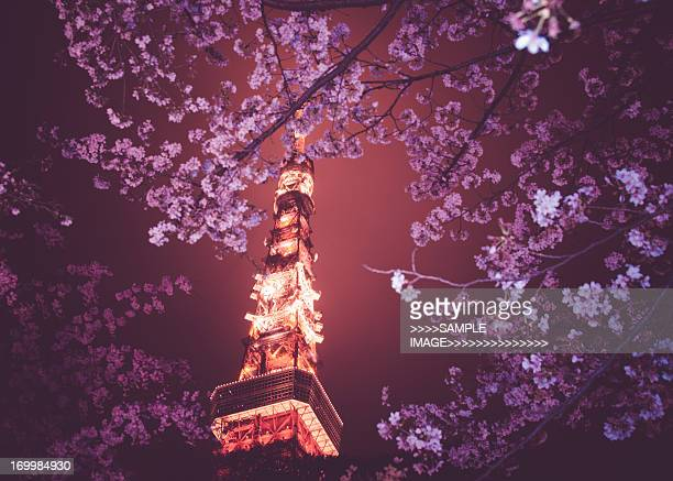 Tokyo and cherry blossoms