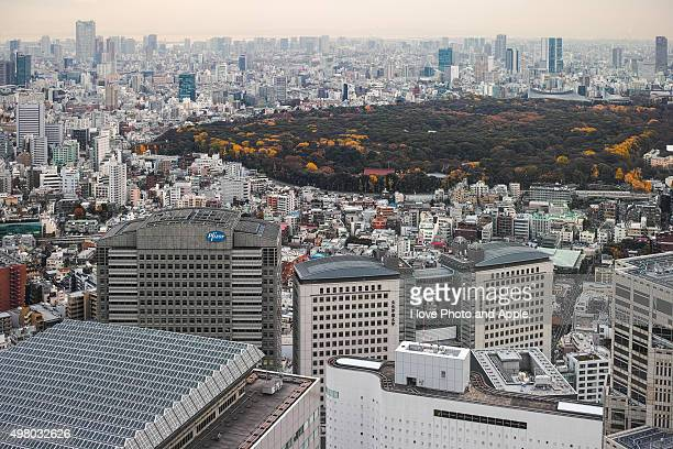 Tokyo city and Forest of the Meiji Shrine