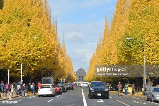Tokyo Ginkgo avenue