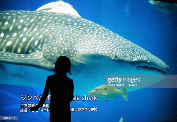 A girl extends her hand to touch a whale shark whose image is projected from Sony's ultrahigh resolution digital movie projector 4K SRX during a...