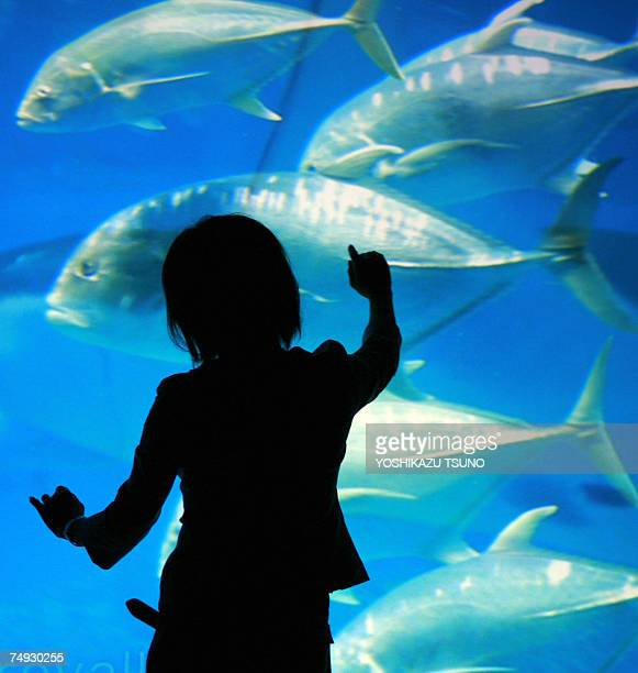 A girl extends her hand to touch giant trevally whose image is projected from Sony's ultrahigh resolution digital movie projector 4K SRX during a...