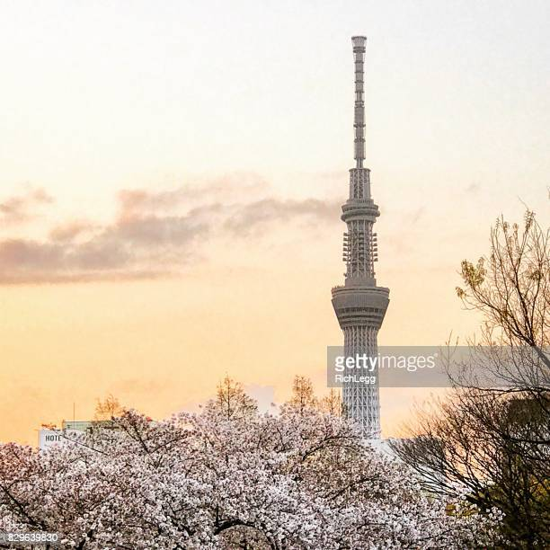 Tokyo Sky Tree with Blossoms