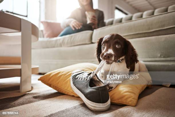 i told her there'll be consequences if she leaves me - spaniel stock photos and pictures
