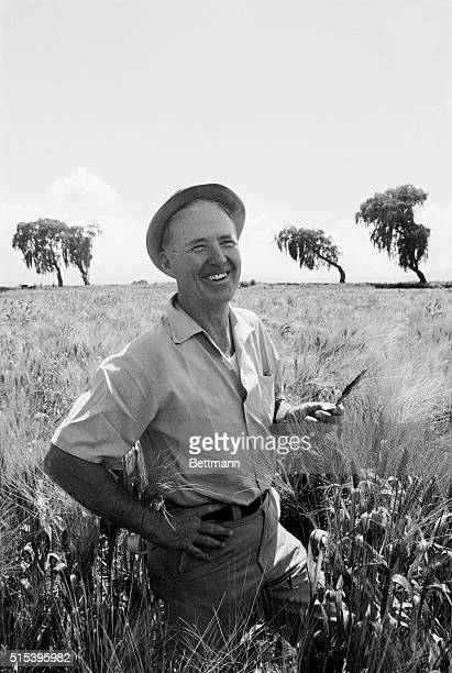 Toluca, Mexico: Dr. Norman Borlaug, an Iowa native, shows some of the wheat he helped develop for which he won Nobel Peace Prize.