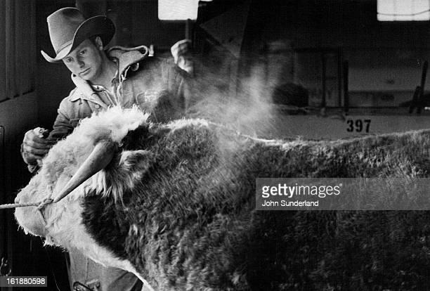 JAN 9 1975 JAN 10 1975 Tom Bargen Employe Of Paul Ridder Herefords Of Callaway Neb Sprays Coat Preparation On Hereford Bull He is preparing the...