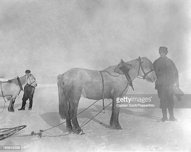 Tom Crean with the pony Bones and Dr Edward Wilson with the pony Nobby at Cape Evans photographed during the last tragic voyage to Antarctica by...